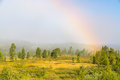 Foggy morning in nature with a rainbow that goes down the woods Royalty Free Stock Photos