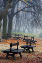 Foggy morning in the park Royalty Free Stock Photos