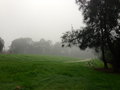 Foggy morning in a park beautiful sydney australia Stock Photography