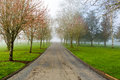 Foggy Morning at the Park Royalty Free Stock Photo