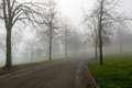 Foggy Morning at the Park Winding Path Royalty Free Stock Photo