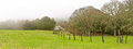 Foggy Morning, Ranch Fences and Oak Trees Panoramic Royalty Free Stock Photo
