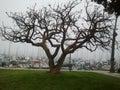 Foggy morning in Santa Barbara. Royalty Free Stock Photo