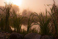 Foggy morning on the shore of the pond with rocky coast and grass Royalty Free Stock Image