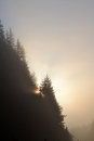 Foggy morning summer landscape with fir tree Royalty Free Stock Photo
