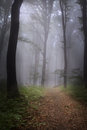 Foggy mystic forest trail in an autumn day Stock Photo