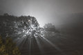 Foggy night light rays are highlighted by a tree at Royalty Free Stock Image