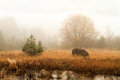 Foggy november landscape Royalty Free Stock Photo