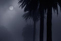 Foggy park at night mysterious in a full moon added some digital noise Royalty Free Stock Images