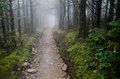 Foggy path trail in the smoky mountains national park near mt le conte Stock Photos