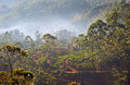 Foggy rain forest in sri lanka at sunrise aerial view to the Stock Images