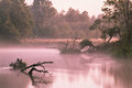 Foggy river in the morning Royalty Free Stock Photo
