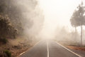 Foggy road in forest, street in misty forest Royalty Free Stock Photo