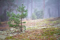 Foggy scenery of the forest Stock Photo