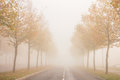 Foggy street with reduced visibility autumn empty due to golden trees in a morning during fall season Stock Photos