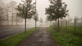 Foggy street scene Royalty Free Stock Photo