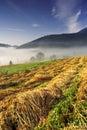 Hmlisté letné ráno vo Vysokých Tatrách