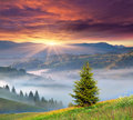 Foggy summer sunrise in mountains the Stock Images
