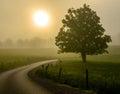 Foggy Sunrise Great Smoky Mountain National Park Royalty Free Stock Photo