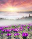 Foggy sunrise in the Carpathian mountains Royalty Free Stock Photo