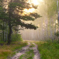 Foggy sunrise cold and summer morning in ukraine Royalty Free Stock Images