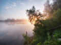 Foggy sunrise on a lake early summer morning tranquil Royalty Free Stock Photos
