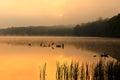 Foggy Sunrise at the Lake Royalty Free Stock Photo