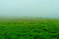 Foggy terrain this is photo of at kaas plateau india during rainy season whole plateau covers with clouds being at the top of the Stock Images