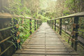 Foggy tropical rain forest pathway trail Royalty Free Stock Photo