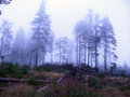 Foggy weather in forest a landscape covered fog Royalty Free Stock Photography