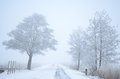 Foggy winter path in the snow Royalty Free Stock Images