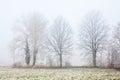 Foggy Winter Trees Royalty Free Stock Photo