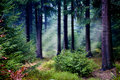 Foggy woods Royalty Free Stock Image
