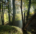 Foggyy forest mysti with sunshine and fog Royalty Free Stock Photo