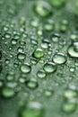 Folha com gotas da água Imagem de Stock Royalty Free