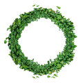 Foliage alphabet letter O, natural green leaves wreath, ivy wrea Royalty Free Stock Photo