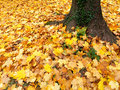 Foliage in autumn Stock Photo