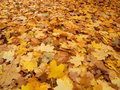 Foliage in autumn Royalty Free Stock Photography