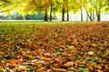 Foliage autumn sunlight background Stock Images