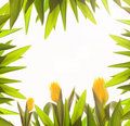Foliage border Royalty Free Stock Photo