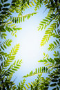 Foliage Frame Royalty Free Stock Photo