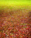 Foliage on grass Stock Photos