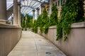 Foliage hanging along a walkway at pack square park in asheville north carolina Royalty Free Stock Image