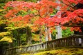 Foliage in nikko autumn japan Royalty Free Stock Images