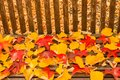 A foliage pillow on a bench in a woodland Royalty Free Stock Photo