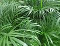 Foliage plants dense vegetation of Stock Images