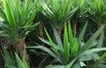 Foliage plants dense vegetation of Stock Image