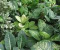Foliage plants dense vegetation of Royalty Free Stock Photography