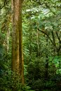 Foliage of rainforest see my other works in portfolio Royalty Free Stock Photo