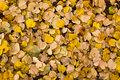 Foliage texture Royalty Free Stock Photo